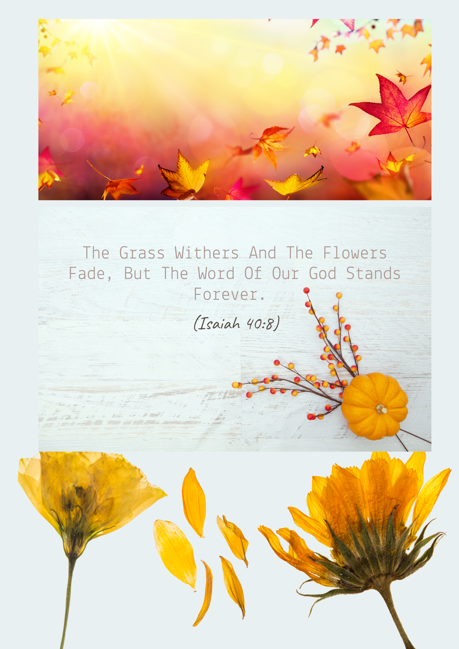 The grass withers the flowers